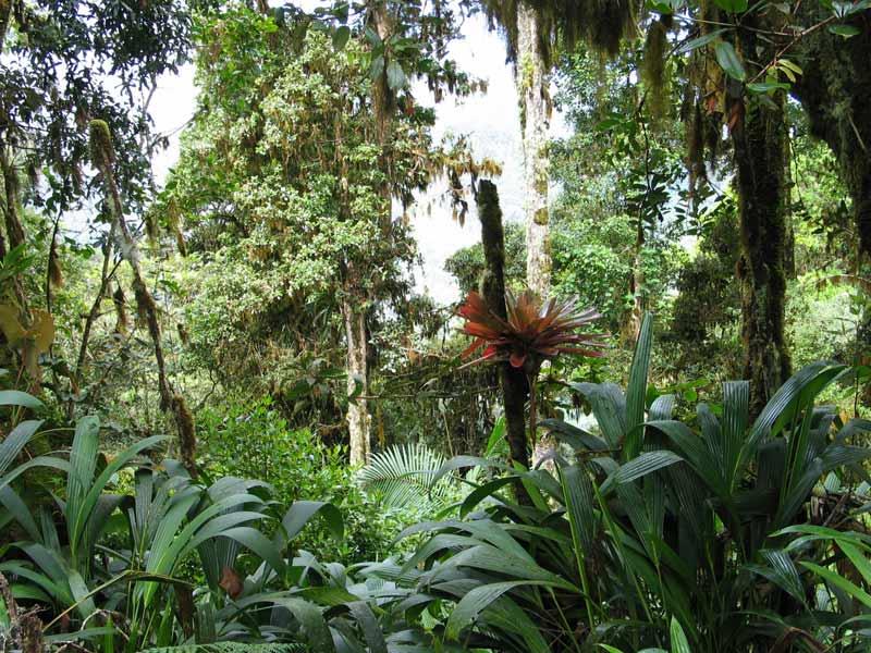 Kostaryka PÓŁWYSEP NICOYA I PARK NARODOWY CORCOVADO