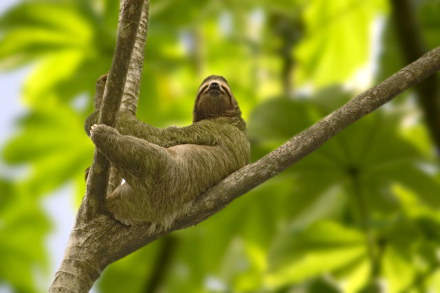 Kostaryka Park Narodowy Manuel Antonio