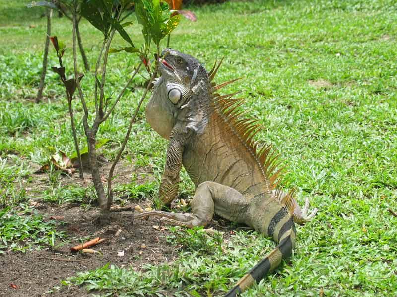 Kostaryka wycieczki Park Narodowy Tortuguero TOP TRAVEL