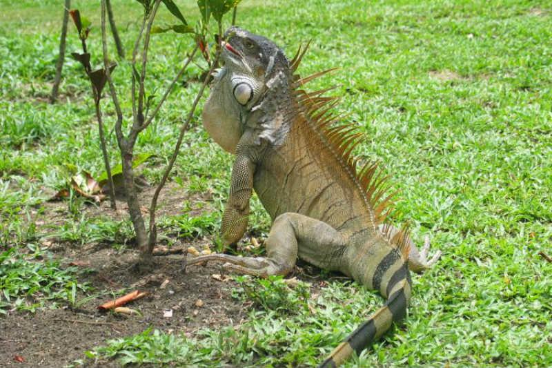 kostaryka wakacje niezapomniane wycieczki top travel
