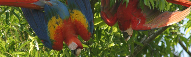 Kostaryka ekskluzywne wakacje - Kraina papug Ara