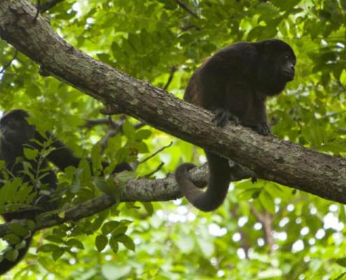 Nikaragua przyroda wycieczki z TOP TRAVEL