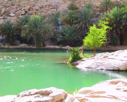 Wycieczka Oman Wadi Bani Khalid
